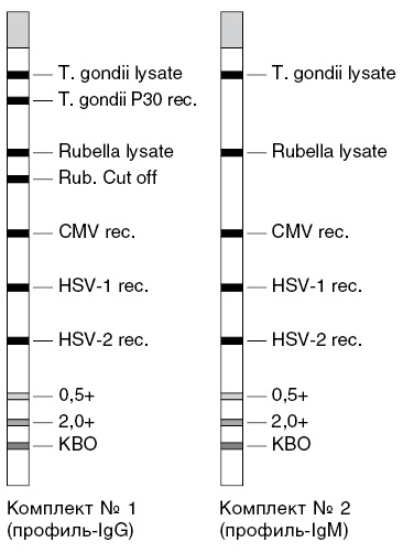 Метод линейного иммуноблоттинга для определения антител классов G и M